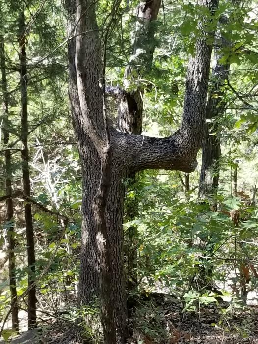 Native American Trail Marker Tree