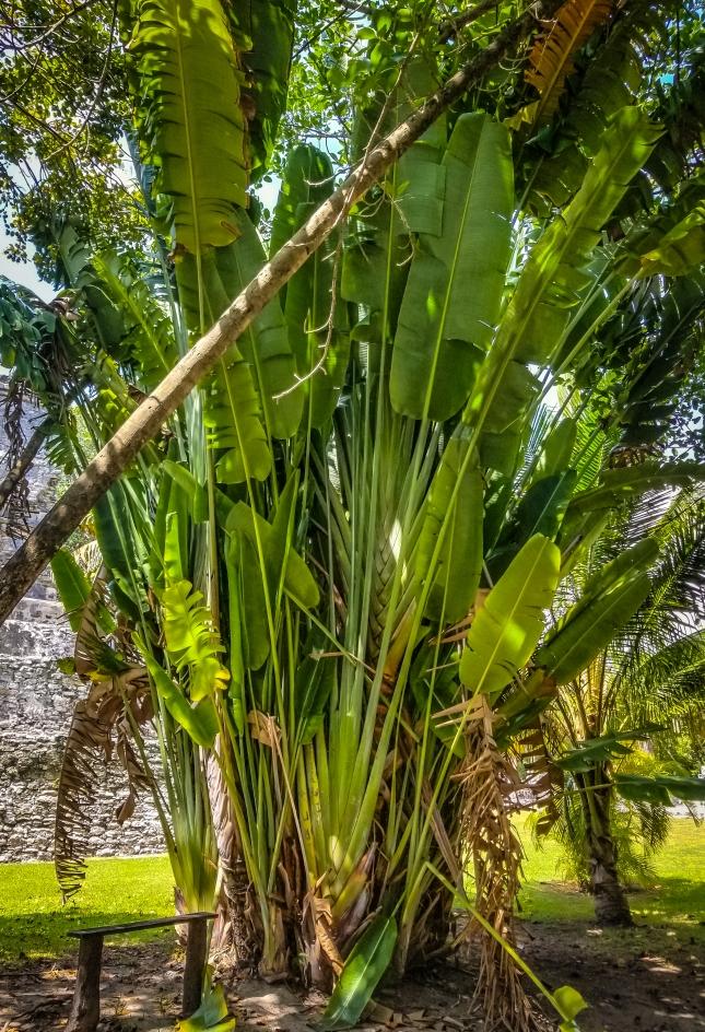 Beyond Giant Bird of Paradise Plants